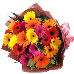 Striking 15 Mixed Color Gerberas Bunch
