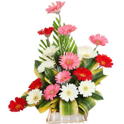 Lovely Arrangement of One Dozen Mixed Gerberas