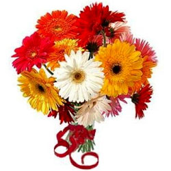 Delightful One Doz Assorted Gerberas in Glass Vase