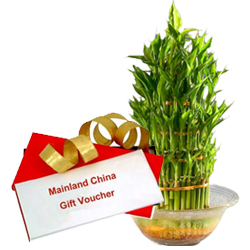 Lucky Bamboo Tree for Fathers Day with Dinner Voucher from Mainland China