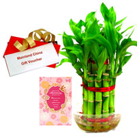 Long-Lasting Present of Bamboo Plant, Anniversary Card and Mainland China Voucher