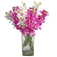 Order Orchids in a Glass Vase Online