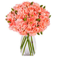 Online Gift of Pink Carnation in a Glass Vase<br>
