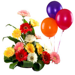 Send Mixed Gerberas Bouquet with Balloons Online