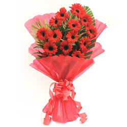 Send Bunch of Red Gerberas Online