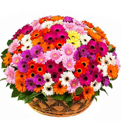 Book Basket of Assorted Gerberas Online