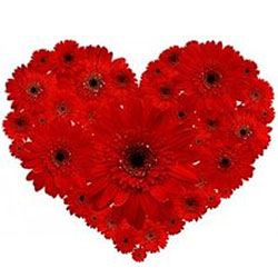 Shop Online Red Gerberas in Heart Shape Arrangement